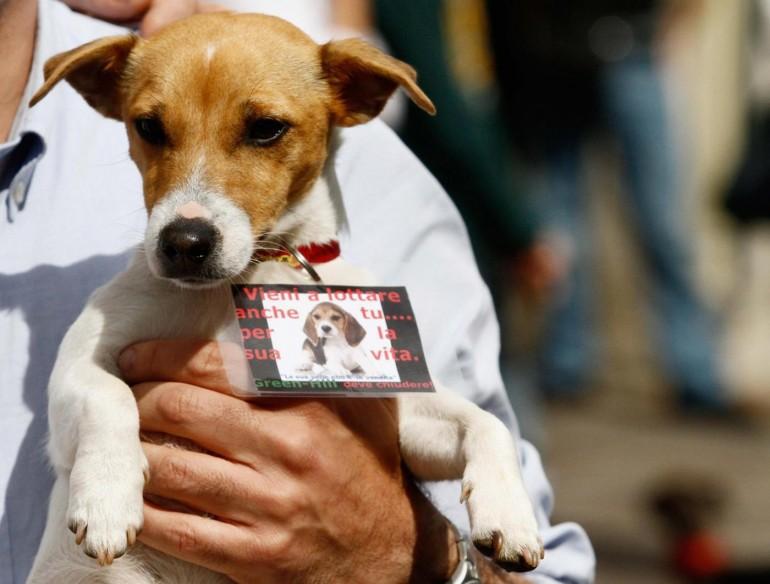 green-hill-processo-beagle